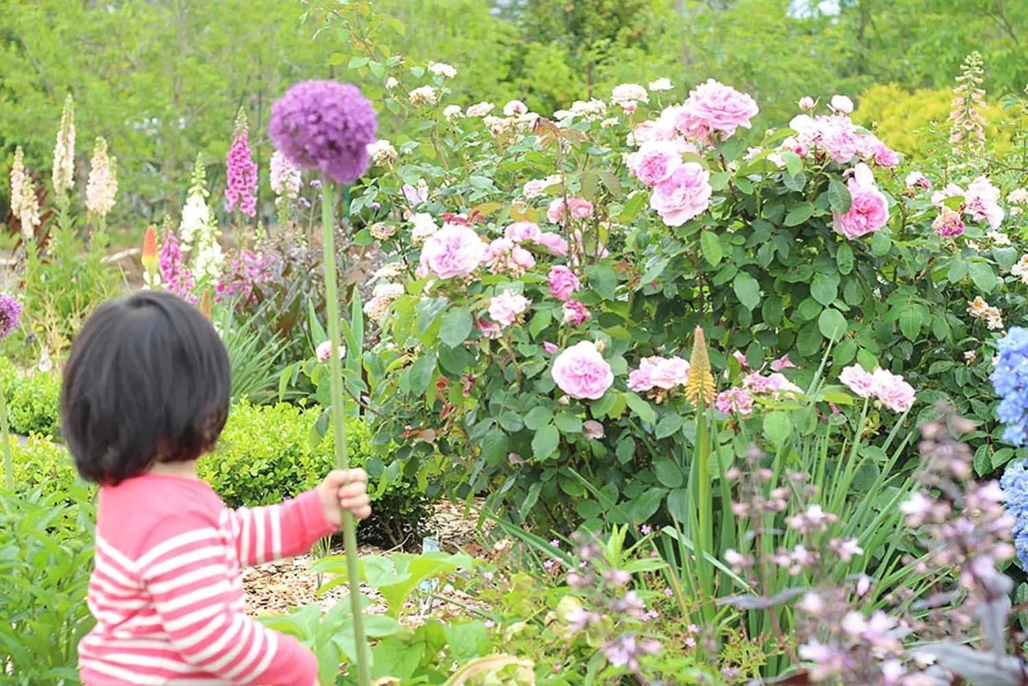 バラのオーガニック栽培